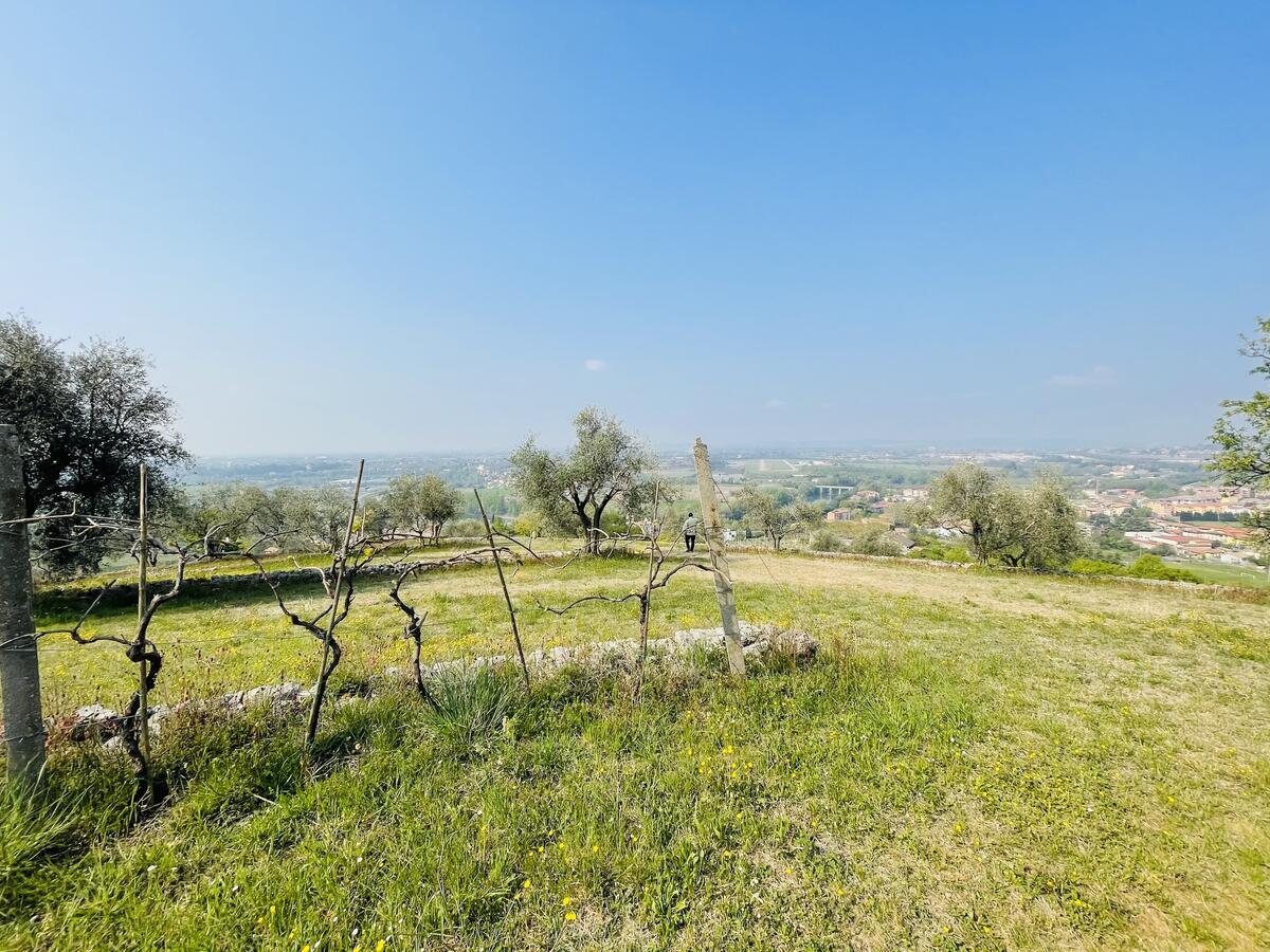 Villa con proprietà estesa per 10 ettari nella posizione più bella di Verona - 3