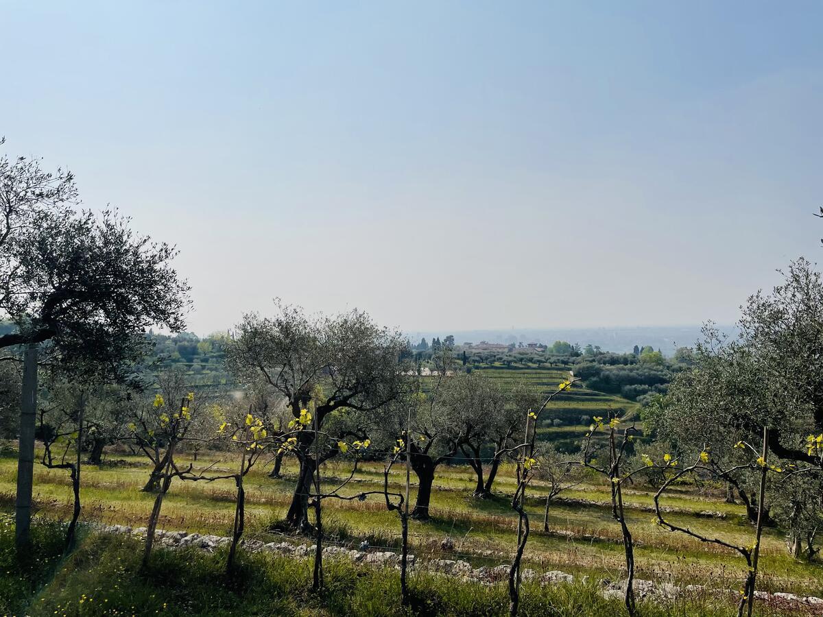 Villa con proprietà estesa per 10 ettari nella posizione più bella di Verona - 16
