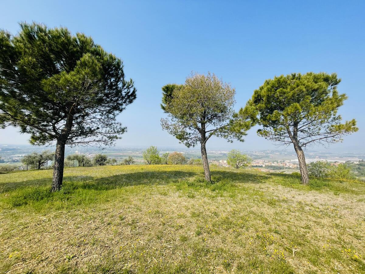 Villa con proprietà estesa per 10 ettari nella posizione più bella di Verona - 18